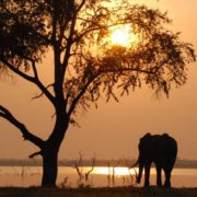 elephant-on-lake-kariba-copia