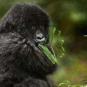 tour primati