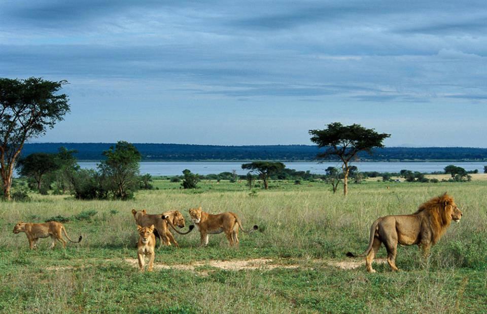 Uganda Luxury Tour