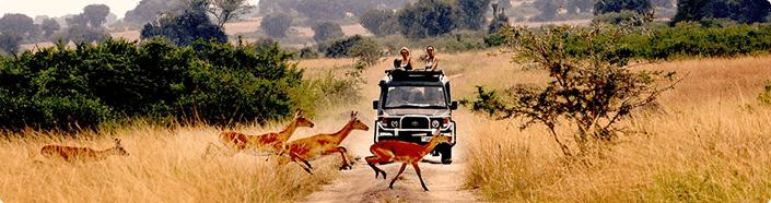 safaris-in-uganda