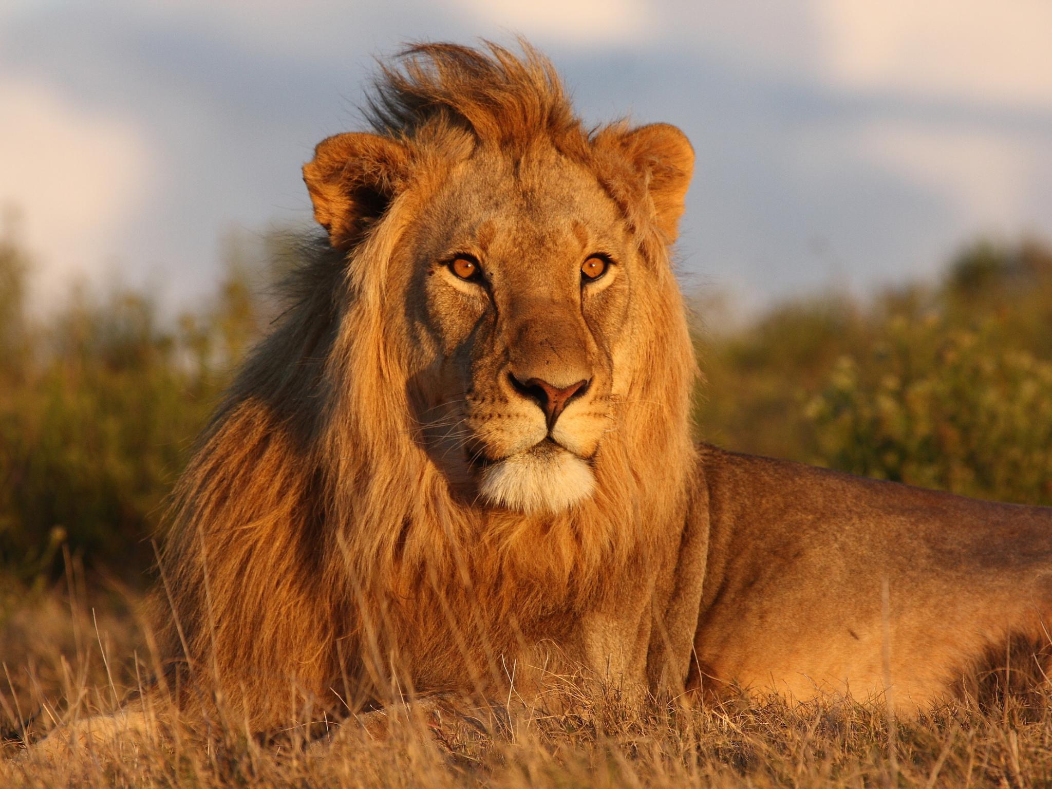 Safari e mare
