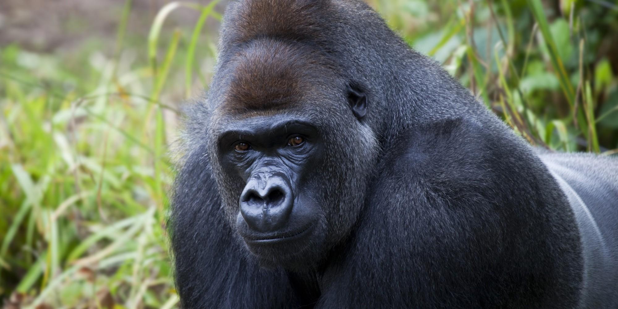UGANDA, Gorilla tour in 10 giorni