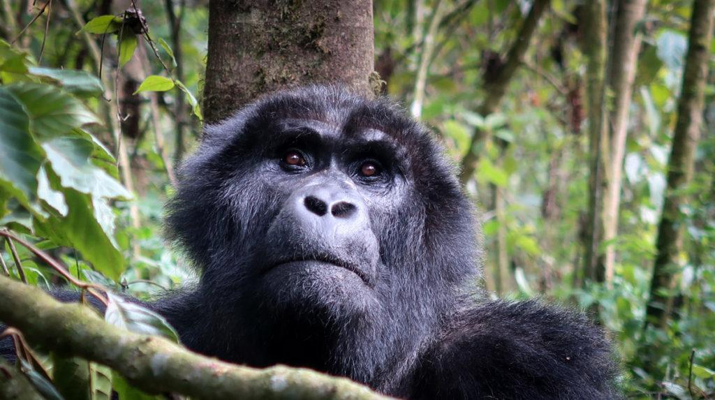Classic Uganda: Viaggio Uganda