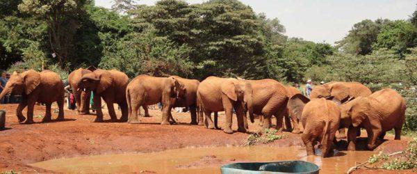 Viaggio Uganda
