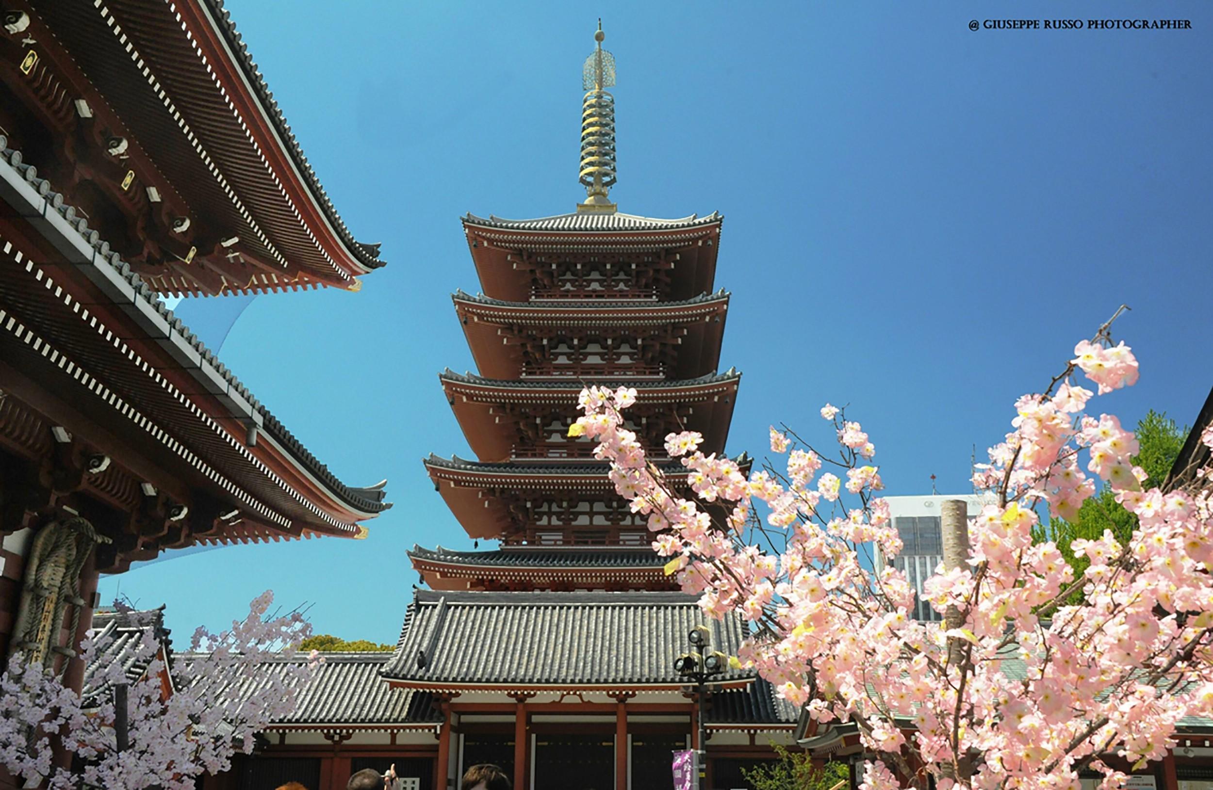 Giappone: Hanami – Giappone tra i ciliegi – viaggio con l'esperto